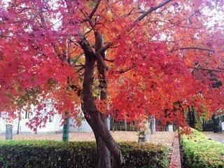 秋の写真・画像素材[47262]