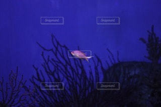 魚の写真・画像素材[47423]