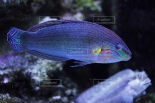 魚の写真・画像素材[47425]