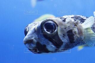 魚の写真・画像素材[47426]