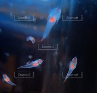 魚の写真・画像素材[53702]