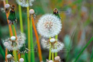 花の写真・画像素材[511905]