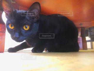 黒猫の写真・画像素材[1008893]