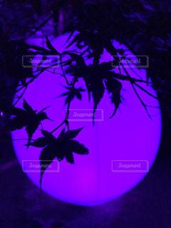 ライトアップの写真・画像素材[1429904]
