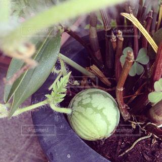 植物の写真・画像素材[513599]