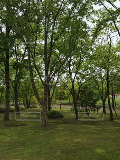 公園の写真・画像素材[578410]