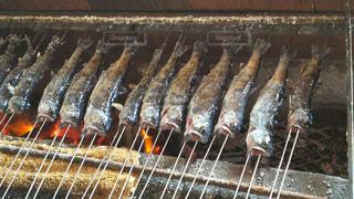 魚 - No.511357