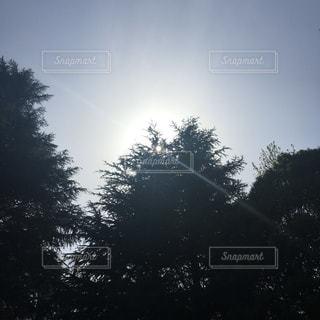 逆光の木々の写真・画像素材[1637462]