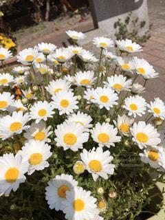 公園のお花の写真・画像素材[2489396]