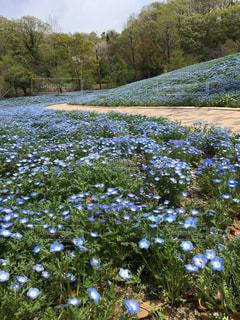 花畑の写真・画像素材[511245]