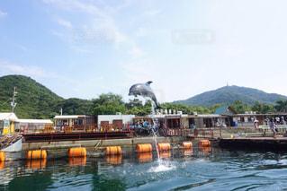 イルカの写真・画像素材[511261]