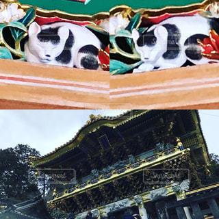 眠り猫の写真・画像素材[2133911]