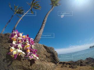海の写真・画像素材[512606]