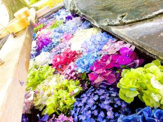 花の写真・画像素材[646427]