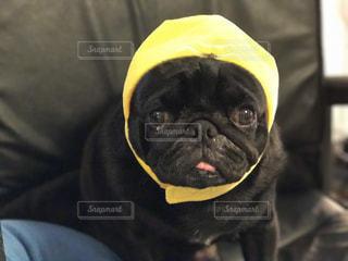 犬の写真・画像素材[552004]
