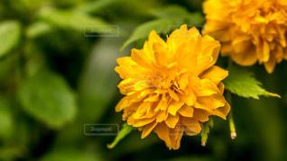 花の写真・画像素材[512019]