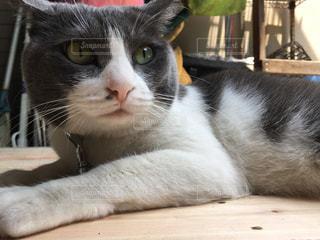 猫の写真・画像素材[574005]