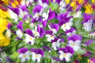 花の写真・画像素材[513108]