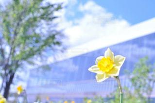 花の写真・画像素材[512252]