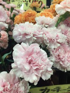 花の写真・画像素材[512350]