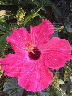 花の写真・画像素材[512751]