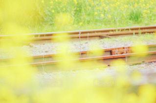 花の写真・画像素材[513162]