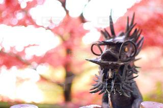 秋の写真・画像素材[514767]