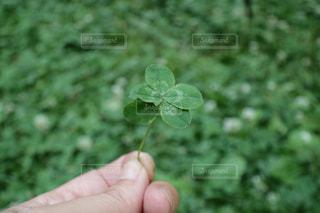緑の写真・画像素材[514785]