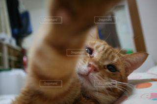 猫の写真・画像素材[512898]