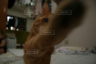 猫の写真・画像素材[512899]