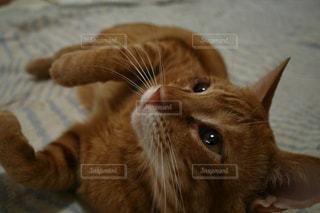 猫の写真・画像素材[512900]