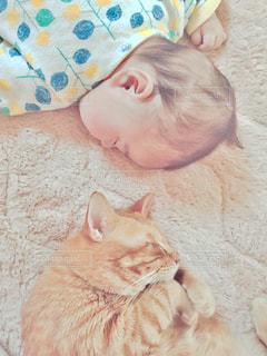 猫の写真・画像素材[512955]