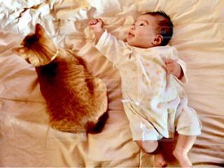猫の写真・画像素材[516386]