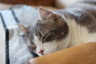 猫 - No.529183