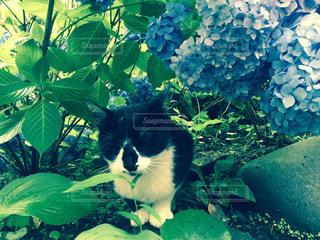 猫の写真・画像素材[513004]