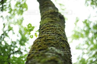 近くの木のアップの写真・画像素材[1774280]