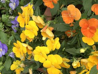 花の写真・画像素材[513088]
