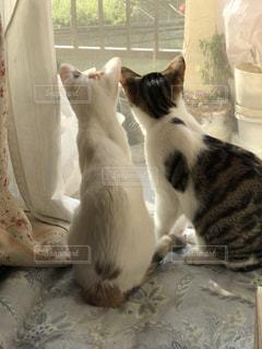 猫の写真・画像素材[513116]