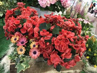 花の写真・画像素材[513140]