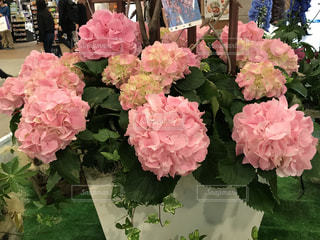 花の写真・画像素材[513141]