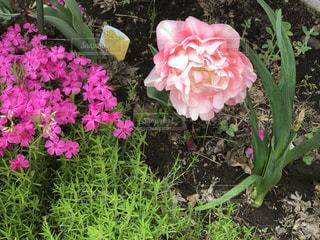 花の写真・画像素材[513143]