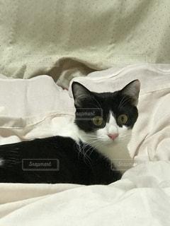 猫の写真・画像素材[513150]