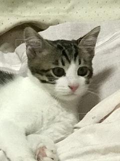 猫の写真・画像素材[513151]