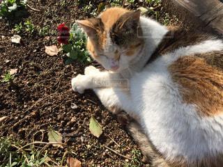 猫の写真・画像素材[513183]