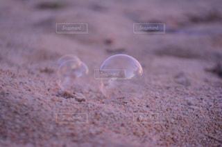 海の写真・画像素材[515096]