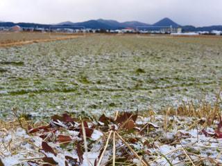 冬の写真・画像素材[515071]