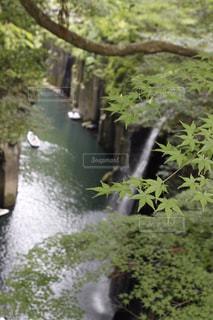 自然の写真・画像素材[530930]