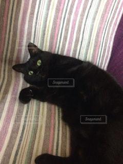 ベッドの上に座って黒い猫の写真・画像素材[1153123]