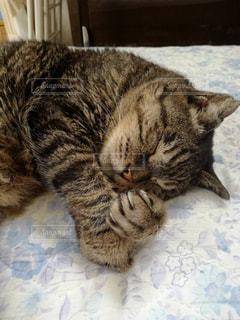 まだ寝かせとくれぃの写真・画像素材[1153284]