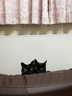 黒猫ズは見た!の写真・画像素材[1153298]